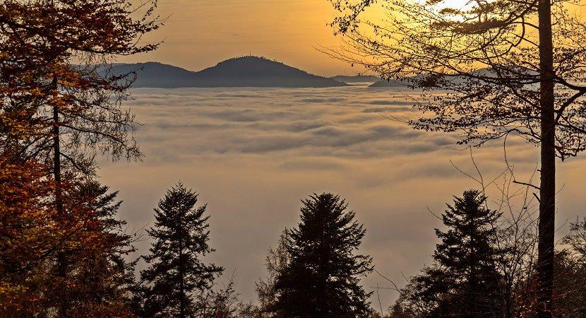 Mythos Schwarzwald