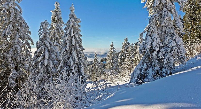 Nordschwarzwald - Hornisgrinde